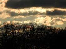 Sun unten im Wald lizenzfreies stockfoto
