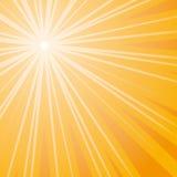 Sun (vector) Stock Image
