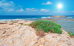 Sun and vegetation by the sea Royalty Free Stock Photos