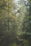 Sun venant par le feuillage dans la forêt brumeuse de ressort de début de la matinée photographie stock