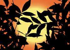 Sun view through leaves Stock Images