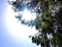 Sun visto através das folhas de uma árvore imagem de stock