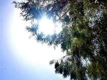 Sun visto attraverso le foglie di un albero Immagine Stock