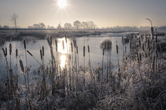 Sun warming up the frozen winter landscape with lake and reed Stock Photo