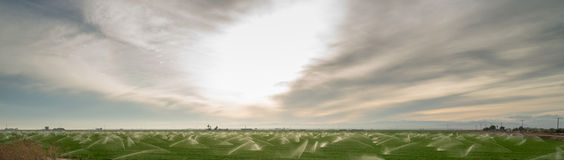Sun Warms Agricultural Field Farm Crop Irrigation Sprinklers Royalty Free Stock Photo