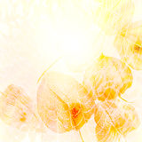 Sun, web, cape gooseberry, yellow abstract background. Stock Photo