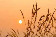Sun and weeds. With orange yellow tones royalty free stock photography