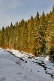 Sun winter river Stock Photography