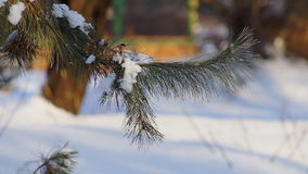 Sun Through Winter Tree stock video footage