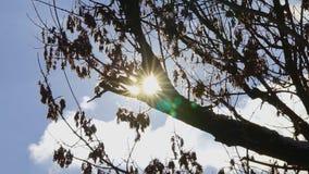 Sun Through Winter Tree stock footage