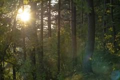 Sun in the woods in summer royalty free stock photos