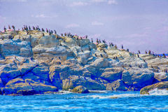 Sun Worshiping. Many types of birds worshiping the sun and warm weather on rocks Stock Images