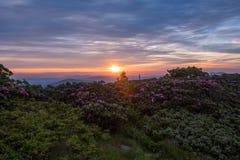 The Sun wybuchy Nad różanecznika ogródem zdjęcia royalty free