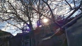 sun& x27; s光芒通过坚果的分支刺穿 库存照片