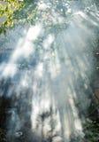 Sun& x27; s-Strahlen dringen durch die Blätter und den Rauch ein Lizenzfreie Stockbilder
