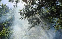 Sun& x27; s-Strahlen dringen durch die Blätter und den Rauch ein Lizenzfreie Stockfotos