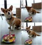 Sun's 1st birthday! Royalty Free Stock Photos