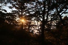 Sun y árbol Foto de archivo libre de regalías