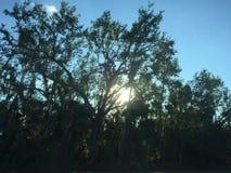 Sun y árboles Imagen de archivo libre de regalías