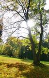 The Sun y árboles Foto de archivo