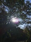 Sun y árboles Imágenes de archivo libres de regalías