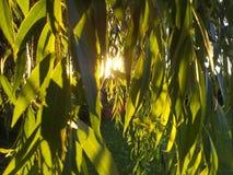 Sun y sombras Foto de archivo libre de regalías