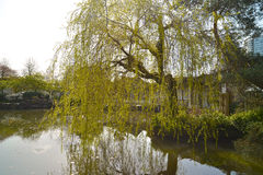 Sun Yat-Sen Public Park in Vancouver Canada. Royalty Free Stock Photo