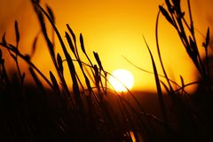 Sun, Yellow, Sky, Sunset royalty free stock photos