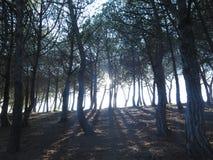 Sun zwischen den Bäumen Lizenzfreies Stockfoto