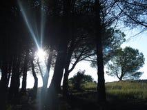 Sun zwischen den Bäumen Stockfotos