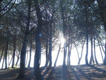 Sun zwischen den Bäumen Lizenzfreie Stockbilder