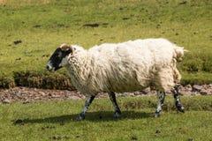 Sunart Ecosse Royaume-Uni l'Europe de loch photographie stock libre de droits