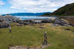 Sunart Escocia Reino Unido Europa del lago de las ovejas fotografía de archivo libre de regalías