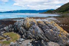 Sunart Escocia Reino Unido Europa del lago de las ovejas imagenes de archivo