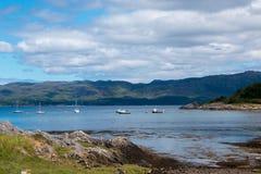 Sunart Escocia Reino Unido Europa del lago de las ovejas foto de archivo libre de regalías
