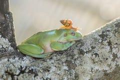 Sunbahting青蛙和蜗牛 免版税库存照片