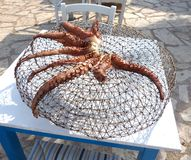 Sunbaked осьминог стоковое изображение