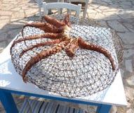 Sunbakedoctopus Stock Afbeelding