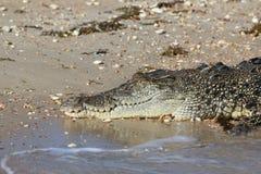 Sunbaking Krokodil Lizenzfreies Stockbild