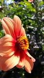 Sunbath di un fiore Immagini Stock