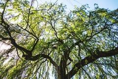 Sunbath. Flower petal spring trees royalty free stock photos