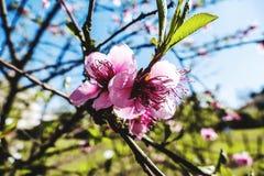 Sunbath. Flower petal spring trees stock photos