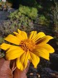 sunbath zdjęcie royalty free