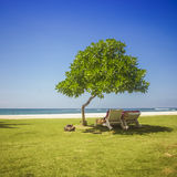 Sunbath under tree Royalty Free Stock Images