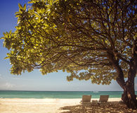 Sunbath under tree Stock Photos