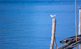 Sunbathe. Bird sunning to clean and relax Royalty Free Stock Images
