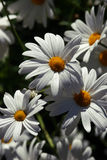 Sunbathed flowers royalty free stock images