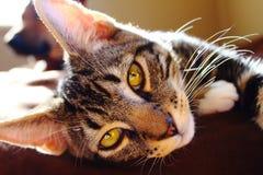 Sunbathing кот Стоковые Изображения RF