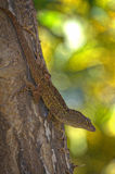 Sunbathing anole Royalty Free Stock Photos