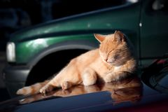 Sunbathing cat Stock Photos